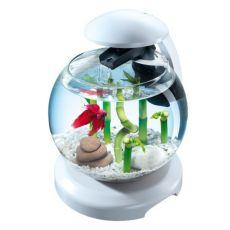 Aquarium für Goldfische oder Kampffische, weiß - Kugel 6,8 L