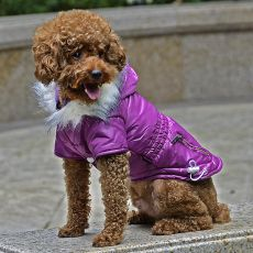 Hundejacke mit Taschen-Imitation und Reißverschluss  - lila, XS