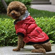 Hundejacke mit schwarzen Bündchen - rot, XS