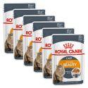 Royal Canin Intense BEAUTY in Jelly 6 x 85g - Gelee in Beutel