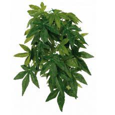 Hängepflanze Abutilon für Terrarium - 20 x 30 cm