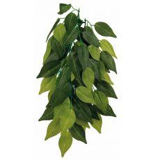 Aquarienpflanze FIKUS - hängende 20 x 50 cm