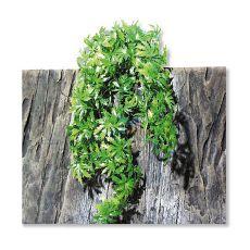 Terrarienpflanze TerraPlanta Cannabis - 65cm