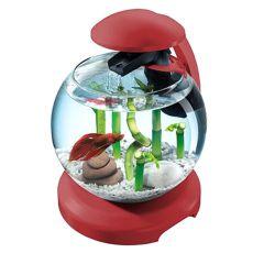 Aquarium für Kampffisch, oder Karausche, weinrot - Kugel 6,8 L