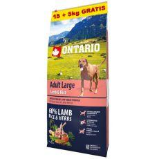 ONTARIO Adult Large -