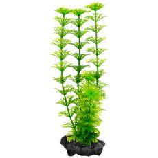 Pflanze Tetra Ambulia, S - 15cm