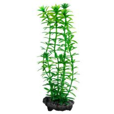 Egeria densa (Anacharis) - Pflanze Tetra 30 cm, L