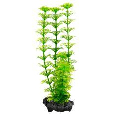 Limnophila sessiliflora ( Ambulia) - Pflanze Tetra 23 cm