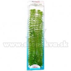 Limnophila sessiliflora ( Ambulia) - Pflanze Tetra 38 cm