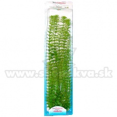 Limnophila sessiliflora ( Ambulia) - Pflanze Tetra 46 cm