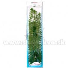 Cabomba caroliniana ( Green Cabomba) - Pflanze Tetra 46 cm, XXL