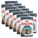 Royal Canin HAIRBALL CARE - in Soße 12 x 85 g