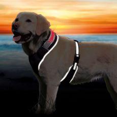Hundegeschirr mit Leuchtband XS-S, 40-50cm
