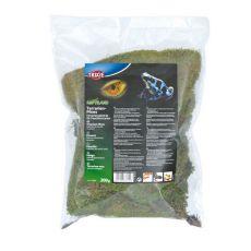 Terrarien Moos zur Erhaltung der Feuchtigkeit - 200 g