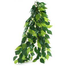 Ficus silk medium - hängende Terrarienpflanze, 55cm